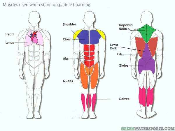 stand up paddle boarding workout and fitness GWS
