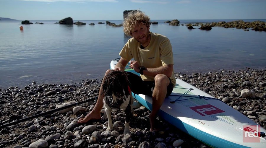 how to get a dog on a stand up paddle board green water sports